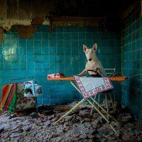 """Exploration folle de lieux abandonnés avec """"Claire"""", un Bull Terrier"""